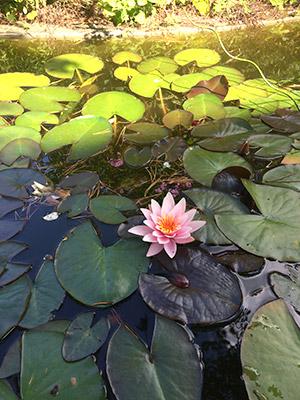 Meditation og mindfulness - Aase Grønbæk - Øje for velvære - Arbejdspladsen